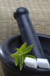 Stevia Rebaudiana mit Zuckerwürfel und Mörser