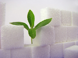 Broken Lump Sugar Wall & Stevia I