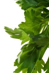 Parsley leaves. Var one
