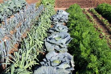 Potager de légumes