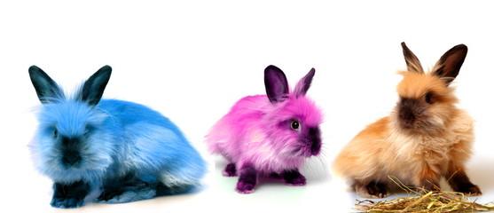 colors rabbits