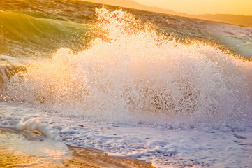 Sea wave in the sunset light