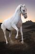White in the desert