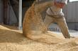 Leinwanddruck Bild - animal feed