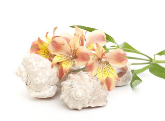 Seashell and flovers on a white background