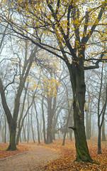 Foggy morning in autumn park