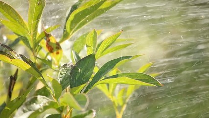 Rain shower for plants
