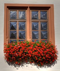 Geranium flower box in front of a window