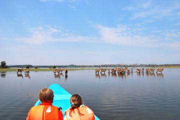 Safari, Naivasha Lake, Kenya