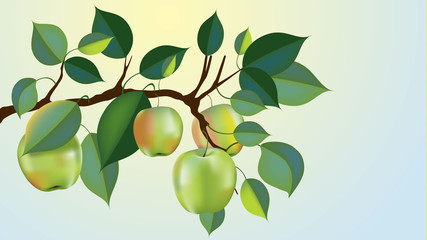 beautiful granny smith apple branch vector