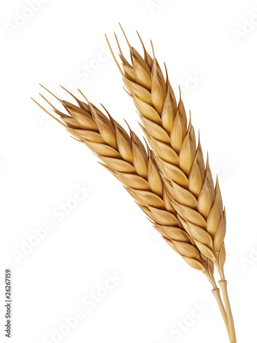 Leinwandbild Motiv Two Wheat