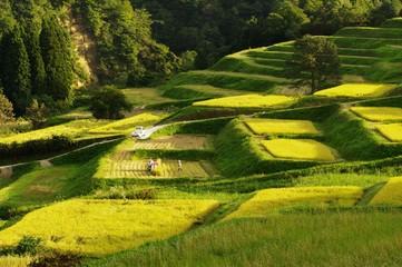 秋の大蔵村 ~稲刈り~