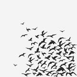 birds background - 26271337