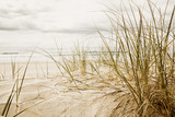 Fototapety Close up of a tall grass on a beach during cloudy season