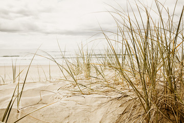 Close up of a tall grass on a beach during cloudy season © Martin Valigursky