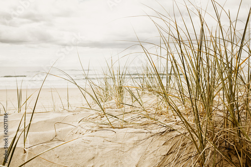 Close up of a tall grass on a beach during cloudy season