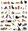 montage animaux - diversité