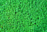 Greenery natural background poster