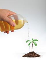 crescita ecologica