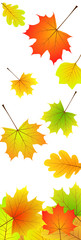 [V] falling leaves