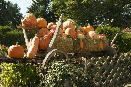 Pumpkins on a Hay trailer 1