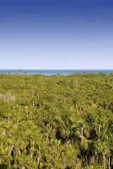 Jungle high view of Mexican jungle