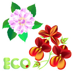eco orchidee - rose