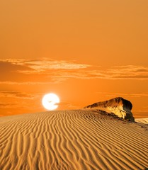 sand dune in a desert at the evening