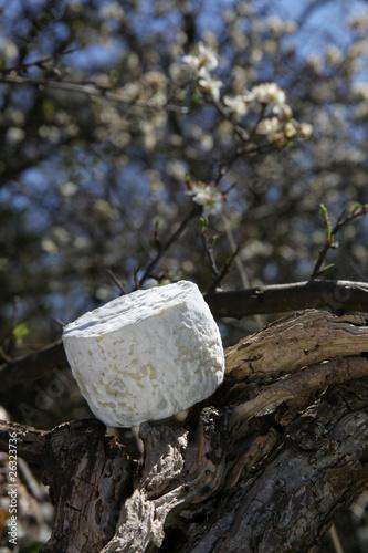 fromage de chèvre - 26323736