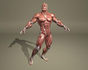 Modello di sistema muscolare
