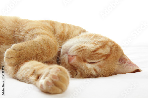 Ginger cat sleeping on bed