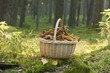 Basket with funnel chanterelle.