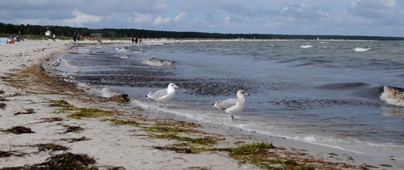Strand mit Möwen an der Ostsee