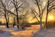 Leinwanddruck Bild - Beautiful winter sunset with trees in the snow