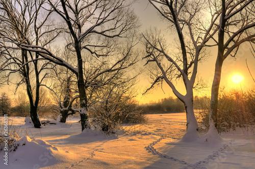 Leinwanddruck Bild Beautiful winter sunset with trees in the snow