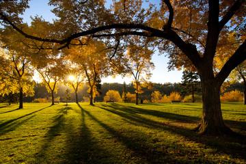 Sun Shining in Park