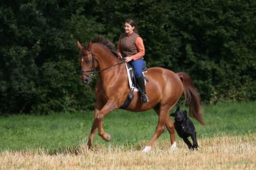 Ausritt mit Pferd und Hund