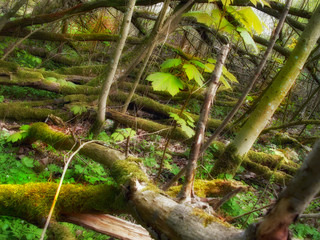 A photo of wild and dark sump forest wilderness