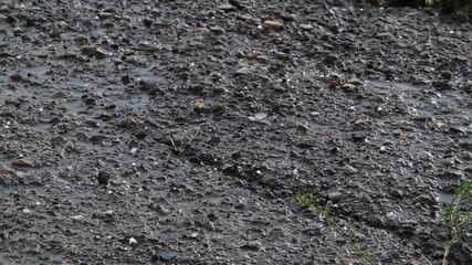 Heavy Hail bounces off asphalt