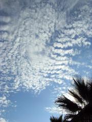 ciel bleu nuages blancs et palmier