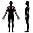Постер, плакат: upper limb bones of man