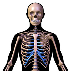 skeleton and silhouette of a man