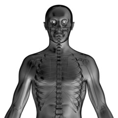 x-ray skeleton of a man
