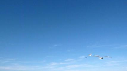 Möwen & Himmel - Video - Seagulls & blue Sky