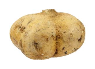 Large jicama