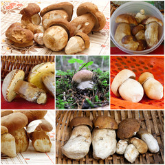 collage funghi porcini - collage boletus edulis mushrooms