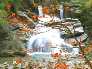 Herbstlaub mittig vor Wasserfall