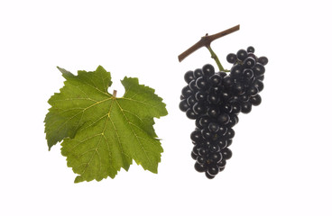 leaf and grapes of red regent