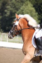 Pferd und Reiterin beim Reitturnier - Hochformat
