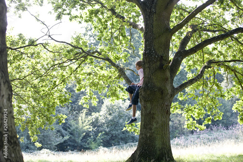 A young boy sitting in a tree